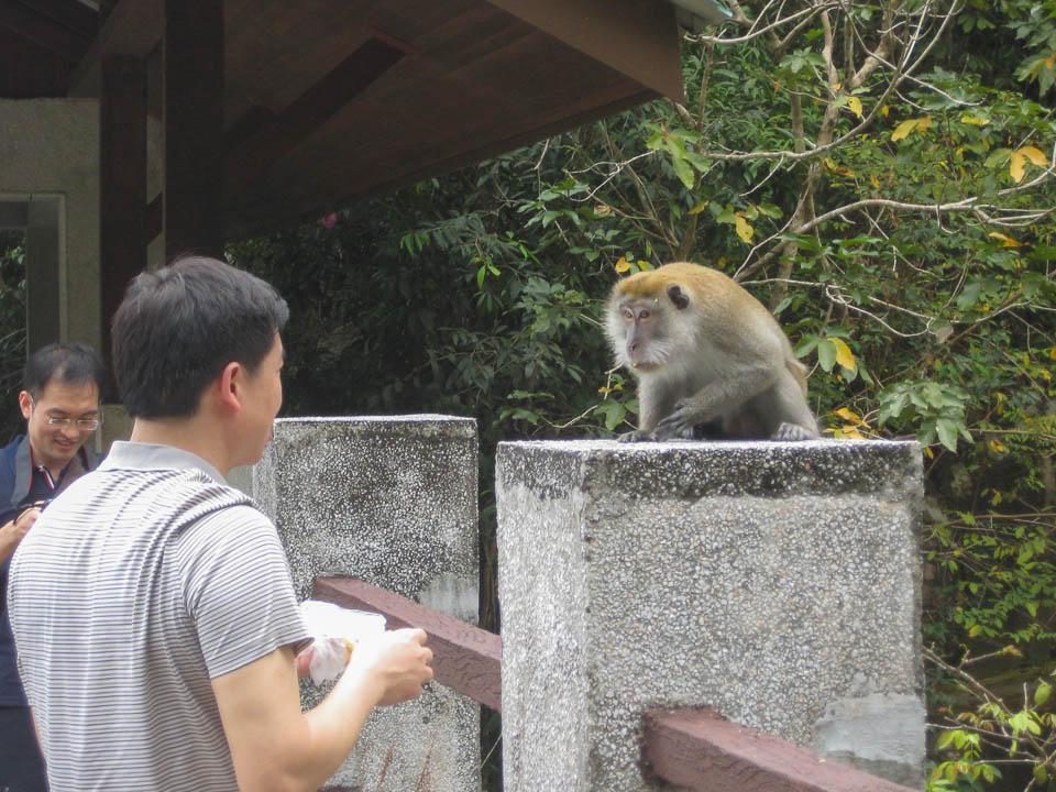 Mono amenazando chino loco.