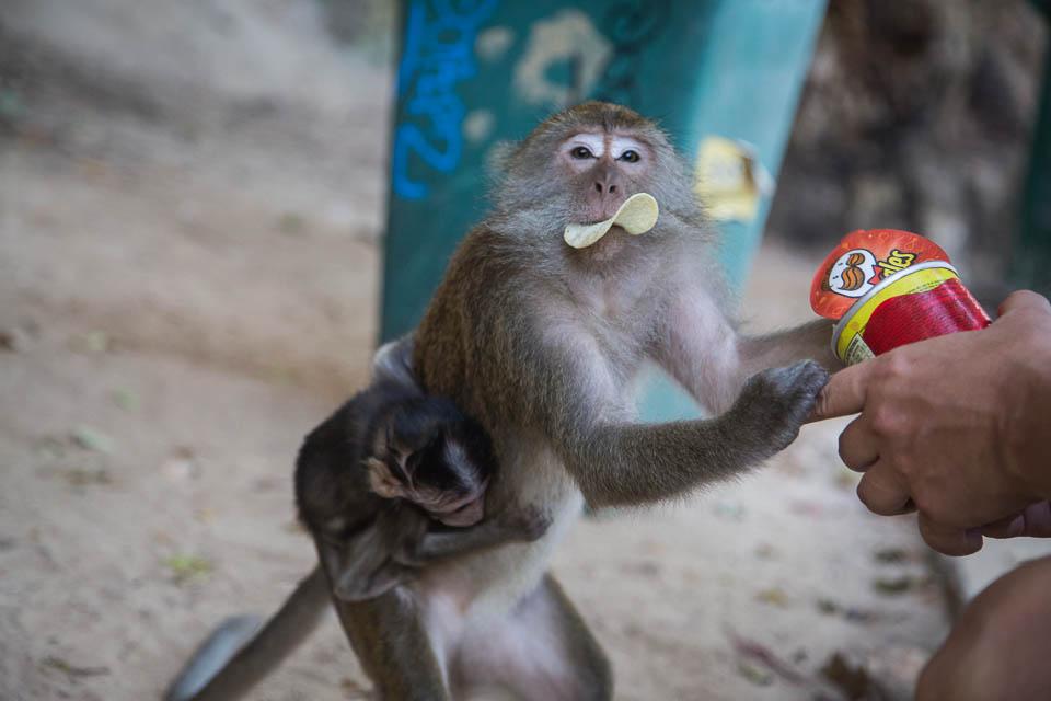 Mono con pringles.