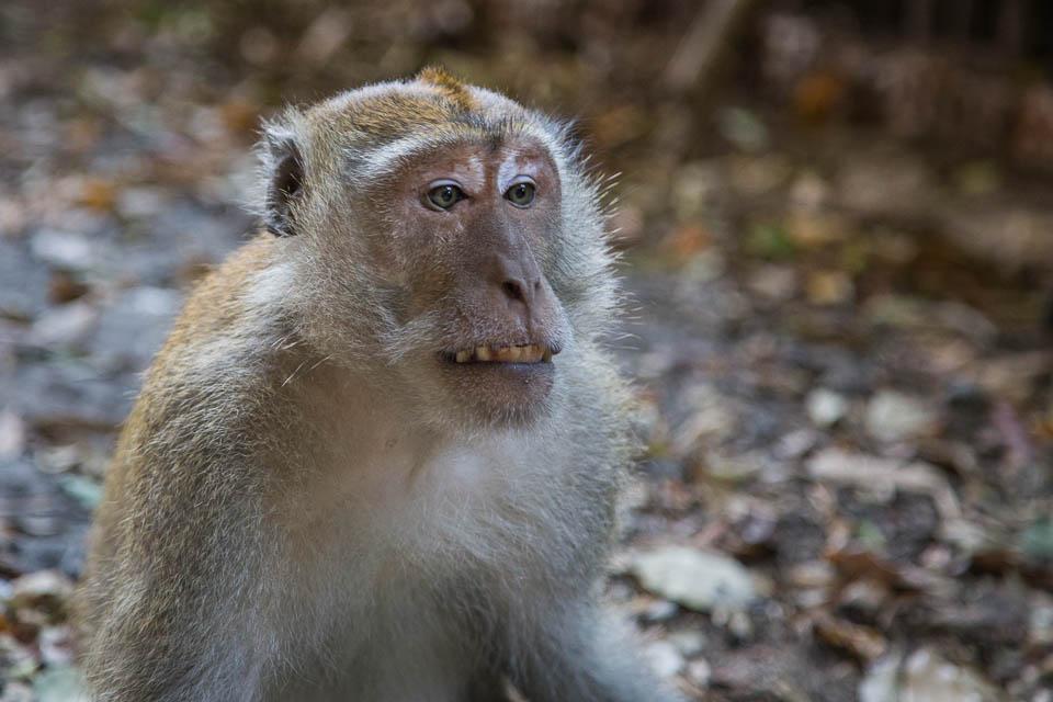 Mono pensando.