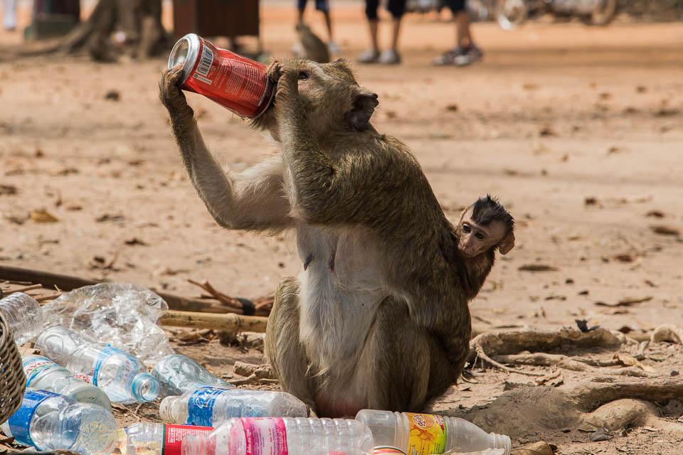 Mono bebiendo cola.