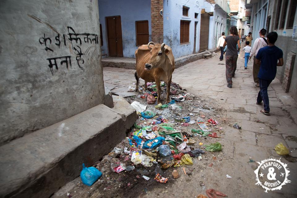 Vaca y su alimentación