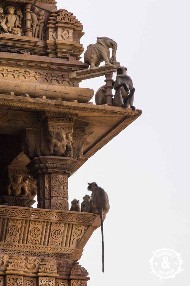 Monos en los templos