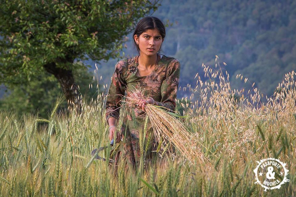 Trabajando el trigo