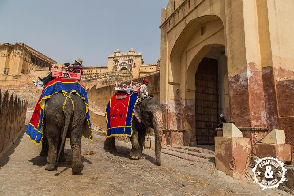 Elefantes para turistas