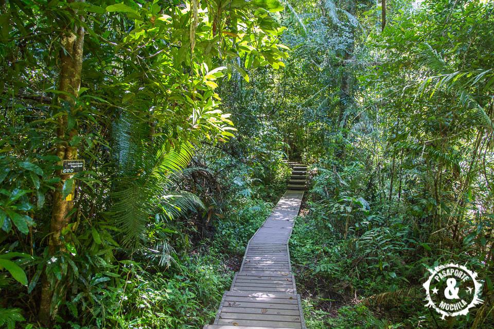 Recorrido selva