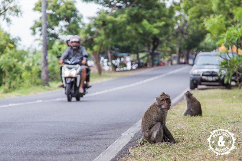 Monos en la carretera