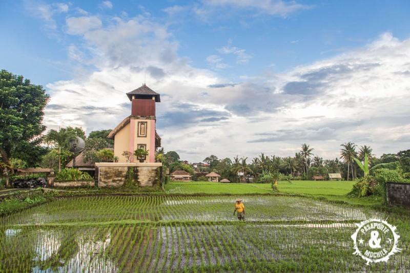 Trabajando los arrozales.