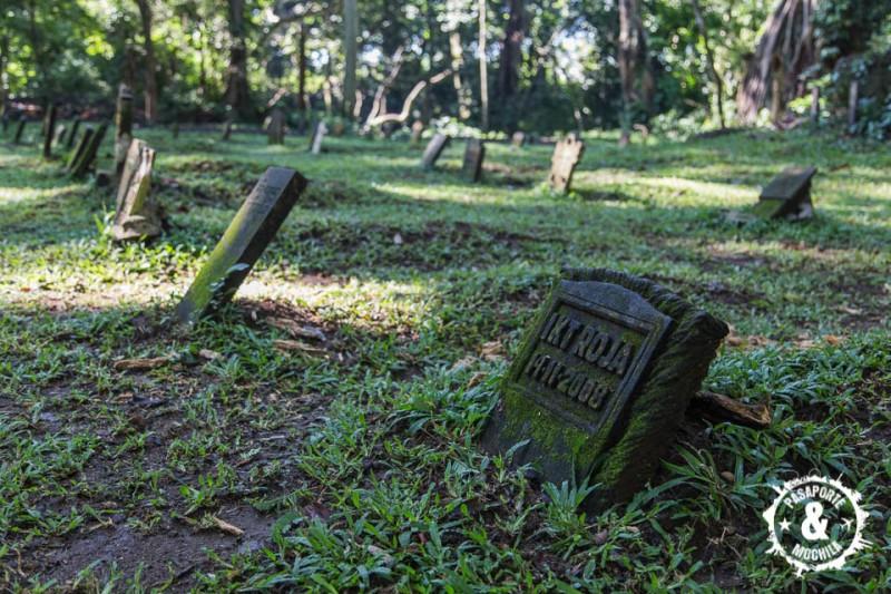Cementerio de monos